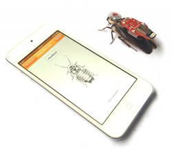 Barata cyborg é controlada por app